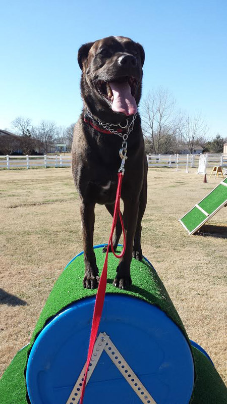 Dog Training Dallas Tx Area